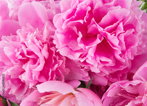 Staande foto Roses pink peony background