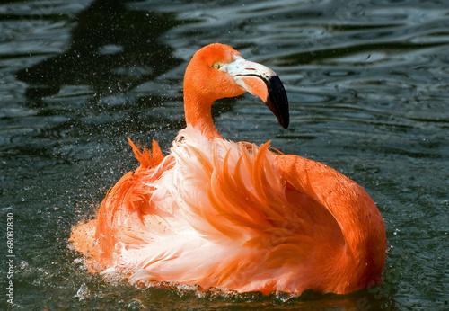 canvas print picture Flamingo 5