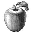Engraved apple - 68088280