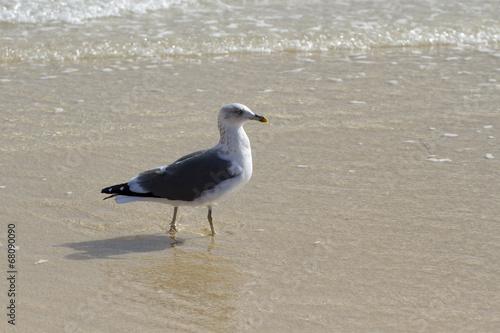Bird walking on the beach
