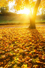 Sunny autumn foliage