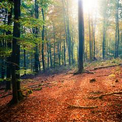Sunny autumn forest © sborisov