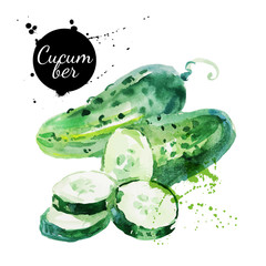 Green cucumber. Hand drawn watercolor painting