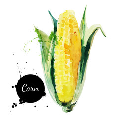 Corncob with leaf. Hand drawn watercolor painting
