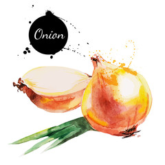 Onion. Hand drawn watercolor painting on white background.