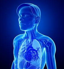 Male x-ray respiratory ststem artwork