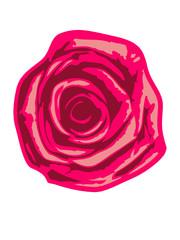 Pinke Rote Rose