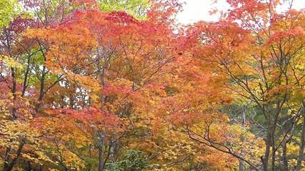 紅葉・深い秋の風景_1