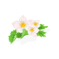 Flowers strawberries with leaves vector illustration