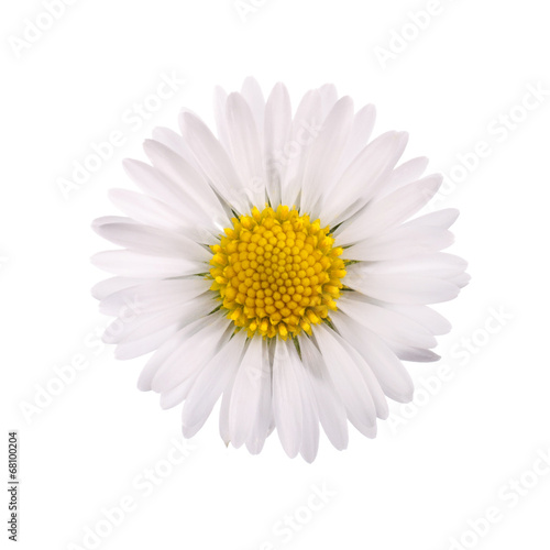 Foto op Canvas Madeliefjes White daisy flower