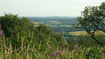 Distant view of Birmingham City with a foreground of trees