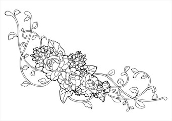 Jasmine flower and vine line drawing vector