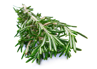 Rosemary herb closeup