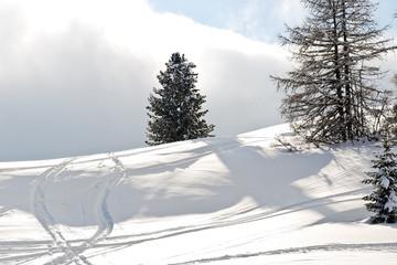 ski run around fir tree in Dolomites, Italy