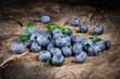 canvas print picture - Blueberry. Organic food. Healthy eating