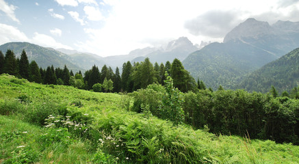 green meadow in Dolomites mountains in summer
