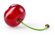 Sour cherry isolated on white