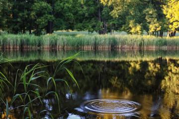 swamp 5