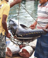 Man weighing a tuna fish at asian market