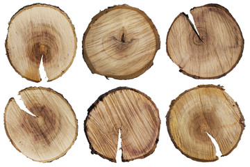 Round cuts of a tree trunk