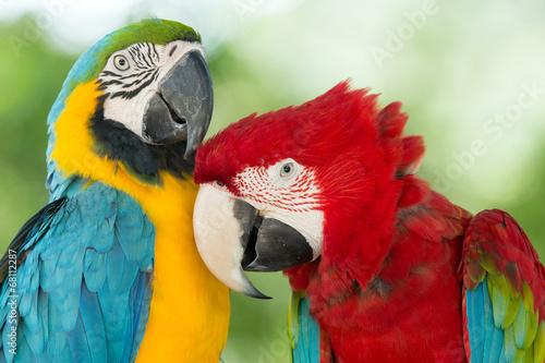 Fotobehang Vogel parrots