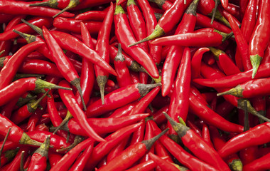 Rote scharfe Chilischoten auf einem Haufen