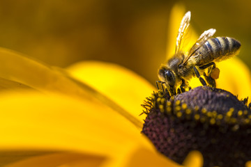 Bee gathering nectar and spreading pollen.