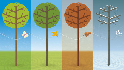 Four Seasons. Illustration of a tree during the course of a year