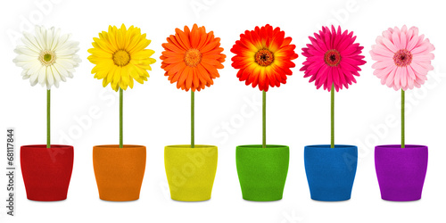 In de dag Gerbera flowers in coloful pots