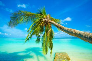 Palmier - océan Indien