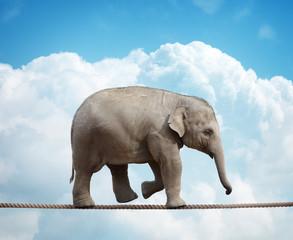 Elephant calf on tightrope