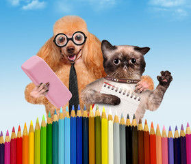 Dog and cat with school supplies