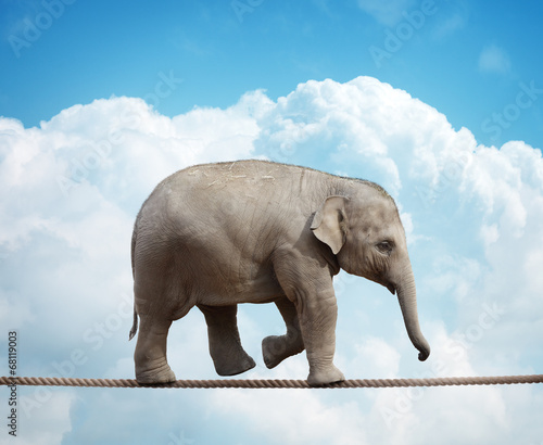 Foto op Canvas Olifant Elephant calf on tightrope
