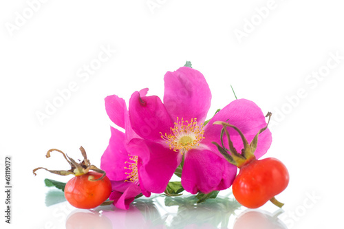 canvas print picture fruits and flowers of wild rose