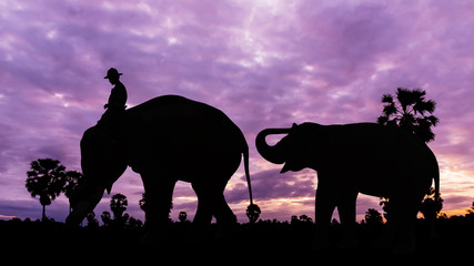 Elephant and baby on twilight time