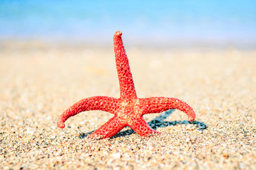 Starfish on sea background