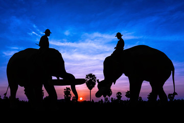 Elephant work on twilight time