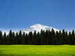 Schneegipfel , Wald und Wiese