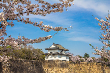 Cherry Blossoms in Osaka Castle Japan