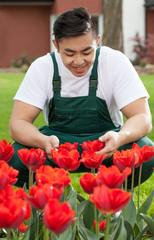 Gardener with tulips