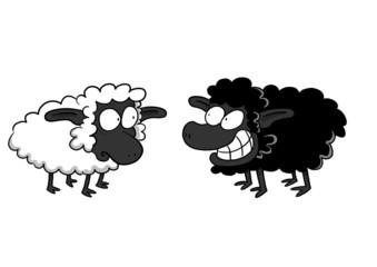 Worried White Sheep And Smiling Black Sheep