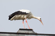 canvas print picture - Balancing Stork