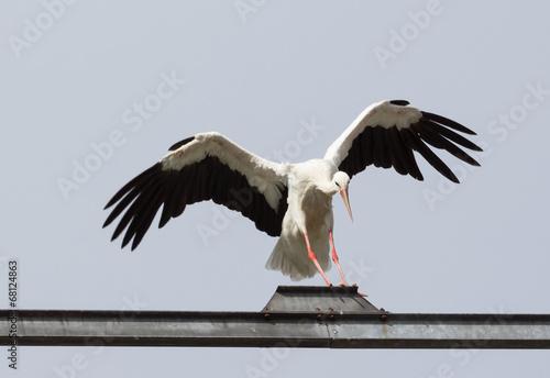 canvas print picture Landing Stork