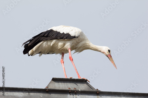 canvas print picture Balancing Stork