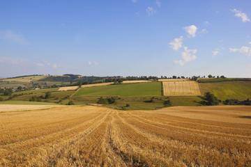 patchwork harvest landscape