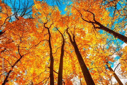 canvas print picture autunm trees