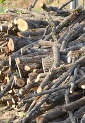 Catasta legna