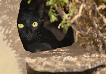 Черная кошка выглядывает из картонного коробка
