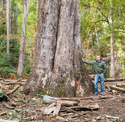 The largest eucalyptus in Galicia, Spain