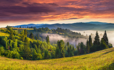Beautiful summer landscape in the foggy mountains.